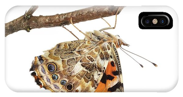 Painted Lady Butterfly Phone Case by Science Photo Library