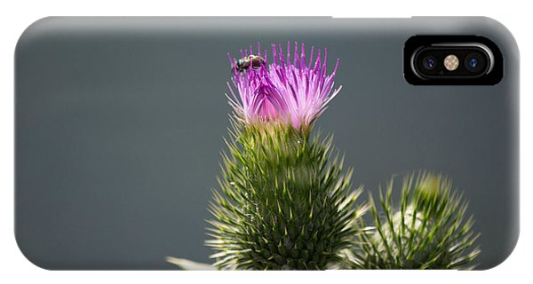 Purple Flower And Bee IPhone Case