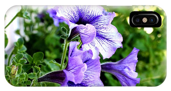 3 Purple Petunias IPhone Case