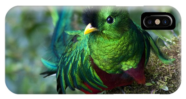 Quetzal IPhone Case