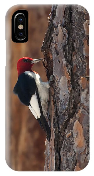 Wakulla iPhone Case - Red-headed Woodpecker by Rich Leighton