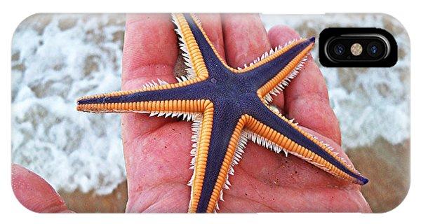 Royal Starfish - Ormond Beach Florida IPhone Case