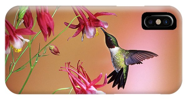 Aquilegia iPhone Case - Ruby-throated Hummingbird (archilochus by Richard and Susan Day