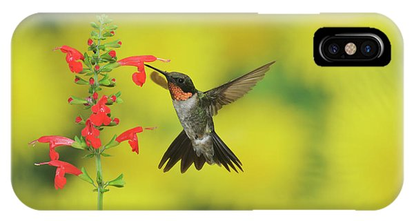 iPhone Case - Ruby-throated Hummingbird Male by Rolf Nussbaumer