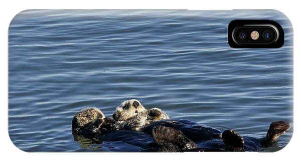 Sea Otters Phone Case by Bob Gibbons/science Photo Library