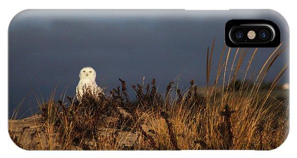Snowy Owl Hampton Bays New York IPhone Case