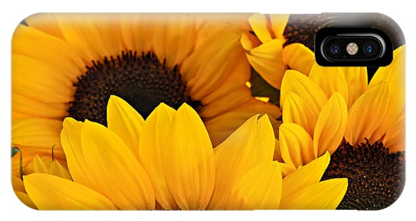 Horticulture iPhone Case - Sunflowers by Elena Elisseeva