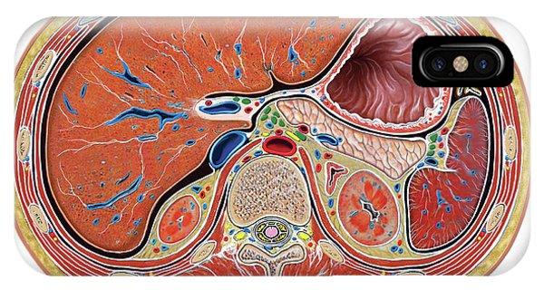The Abdomen Phone Case by Asklepios Medical Atlas