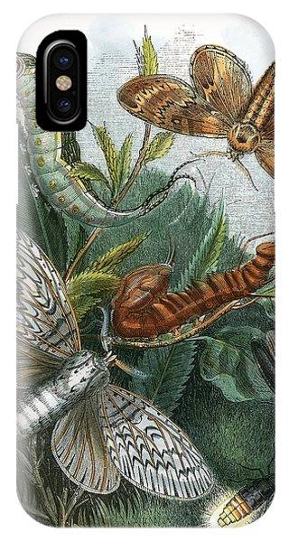 Chrysalis iPhone Case - The Butterfly Vivarium by English School