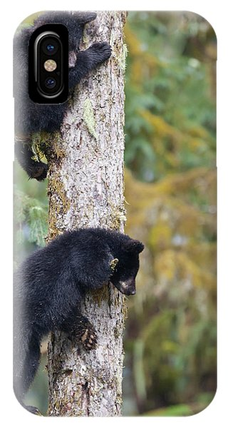 Bear Creek iPhone Case - Usa, Alaska, Anan Creek by Jaynes Gallery