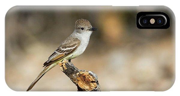 Flycatcher iPhone Case - Usa, Arizona, Buckeye by Jaynes Gallery