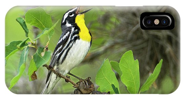 Migratory Birds iPhone Case - Usa, Texas, Hill Country by Jaynes Gallery