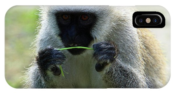 Vervet Monkey IPhone Case