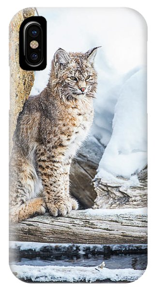 Bobcats iPhone Case - Wyoming, Yellowstone National Park by Elizabeth Boehm