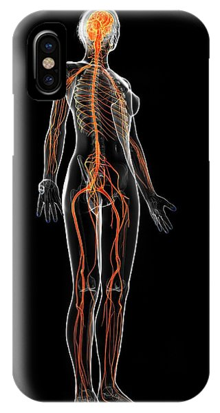 Female Nervous System Phone Case by Sebastian Kaulitzki