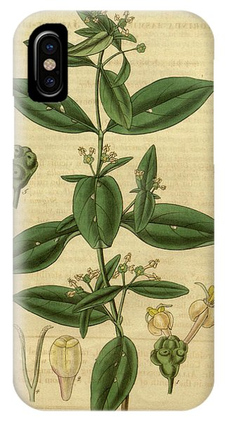 Kew Gardens IPhone Case   Botanical Print By Sir William Jackson Hooker By  Quint Lox