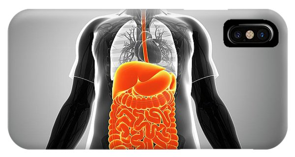 Male Digestive System Phone Case by Pixologicstudio/science Photo Library