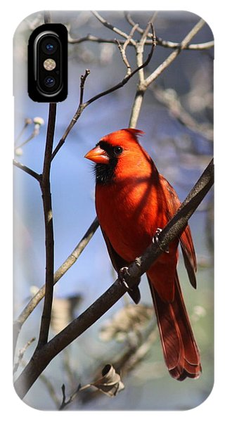 3477-006- Northern Cardinal IPhone Case