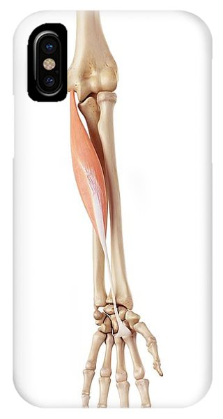 Muscles Of The Human Arm Phone Case by Sebastian Kaulitzki/science Photo Library