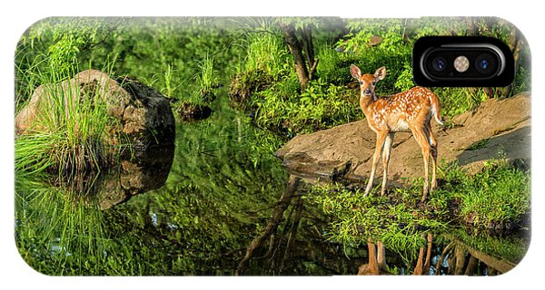 White Tailed Deer iPhone Case - Usa, Minnesota, Sandstone, Minnesota by Rona Schwarz