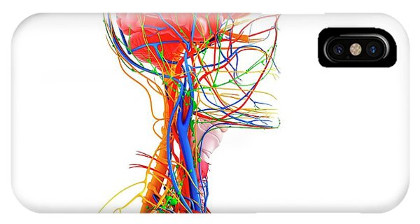 Human Anatomy Phone Case by Pixologicstudio/science Photo Library