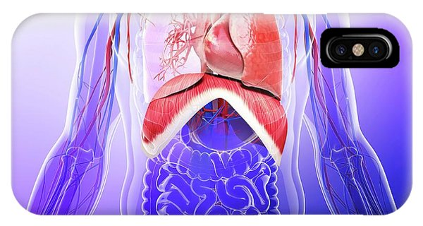 Human Respiratory System Phone Case by Pixologicstudio