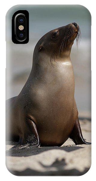 Mammal iPhone Case - Usa, California, La Jolla by Jaynes Gallery