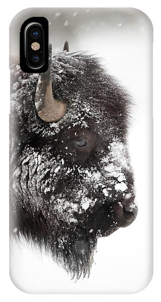 iPhone Case - American Bison by Dr P. Marazzi/science Photo Library