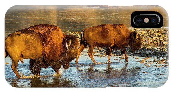North Dakota Badlands iPhone Case - Bison Crossing The Little Missouri by Chuck Haney