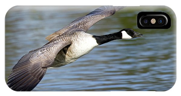Canada Goose iPhone Case - Canada Goose by John Devries/science Photo Library