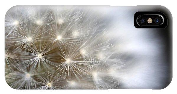 Dandelion Backlit Close Up IPhone Case