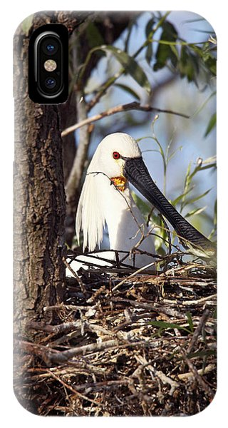 Eurasian Spoonbill Or Common Spoonbill IPhone Case