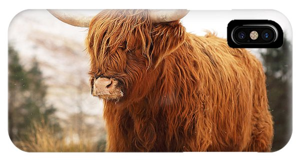 Bull Art iPhone Case - Highland Cow by Grant Glendinning