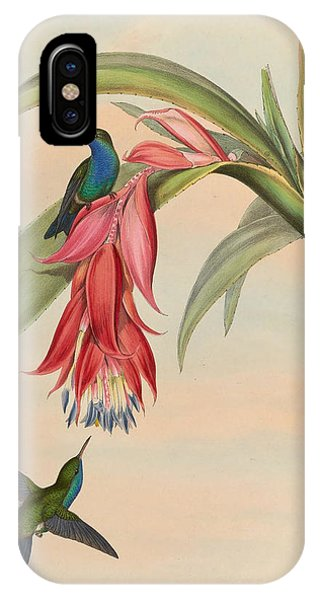 Humming Bird iPhone Case - Hummingbirds by Philip Ralley