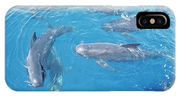 Long-finned Pilot Whales Phone Case by Christopher Swann/science Photo Library