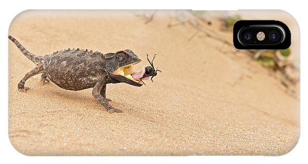 Behaviour iPhone Case - Namaqua Chameleon Catching Prey by Tony Camacho
