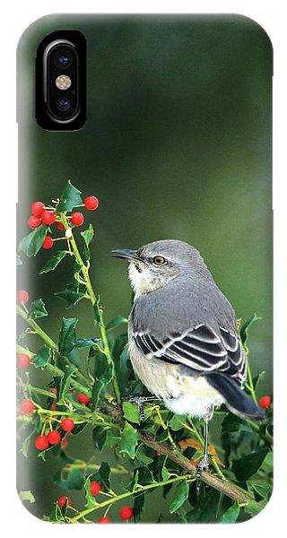 Northern Mockingbird (mimus Polyglottos IPhone Case