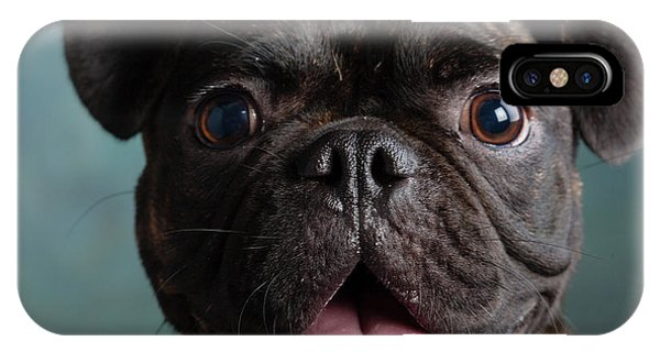 Pug iPhone X Case - Portrait Of Pug Bulldog Mix Dog by Animal Images
