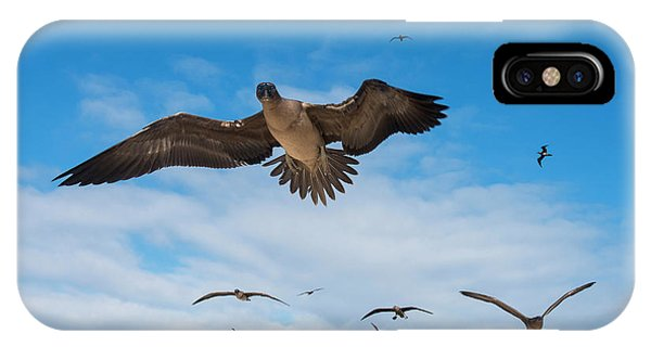 Red-footed Booby (sula Sula Websteri IPhone Case