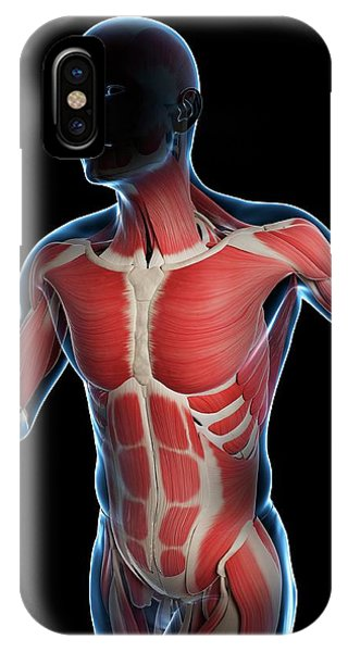 Runner Muscles Phone Case by Sciepro/science Photo Library