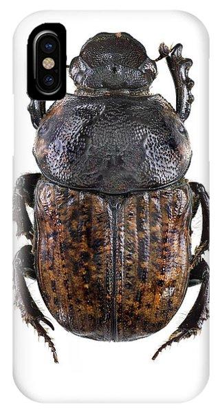Scarab Beetle IPhone Case