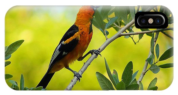 Spot Breasted Oriole IPhone Case