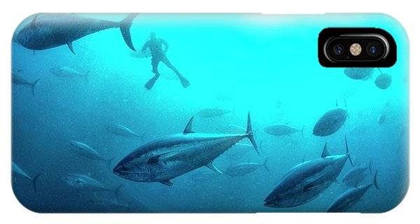Ichthyology iPhone Case - Tuna Farming by Louise Murray/science Photo Library