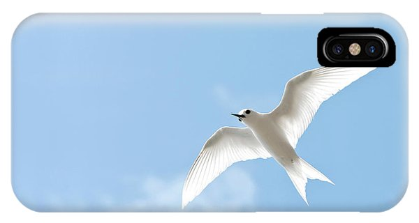 Archipelago iPhone Case - White Tern (gygis Alba Rothschildi by Daisy Gilardini