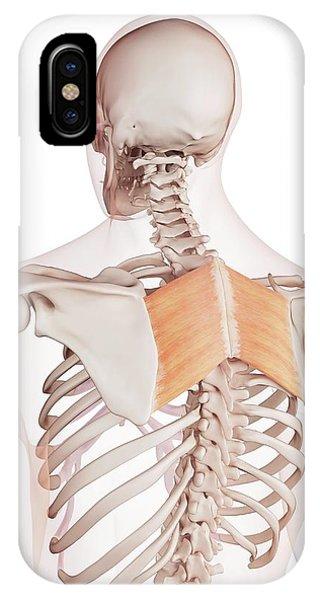 Human Back Muscles Phone Case by Sebastian Kaulitzki/science Photo Library