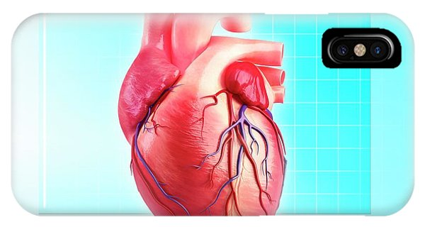Human Heart Phone Case by Pixologicstudio/science Photo Library