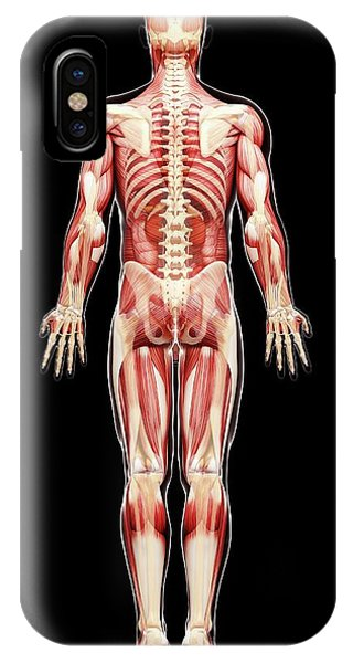 Male Anatomy Phone Case by Pixologicstudio/science Photo Library