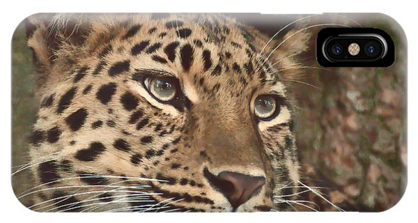 Amur Leopard IPhone Case