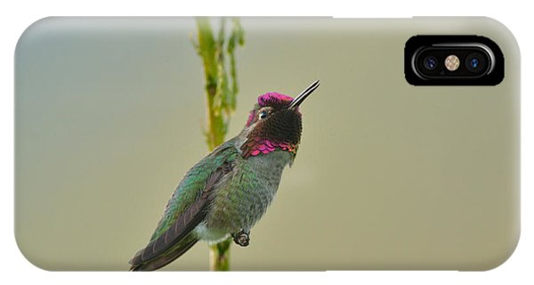Anna's Hummingbird IPhone Case