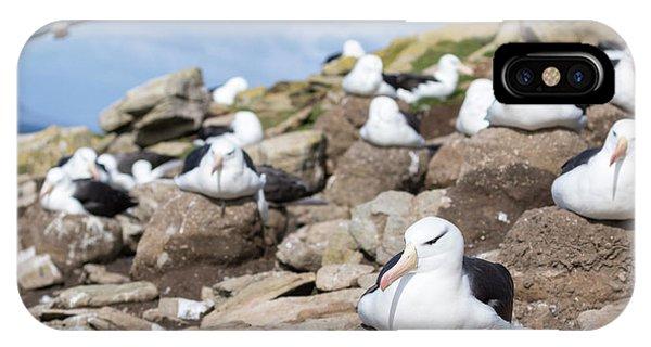 Black-browed Albatross (thalassarche IPhone Case